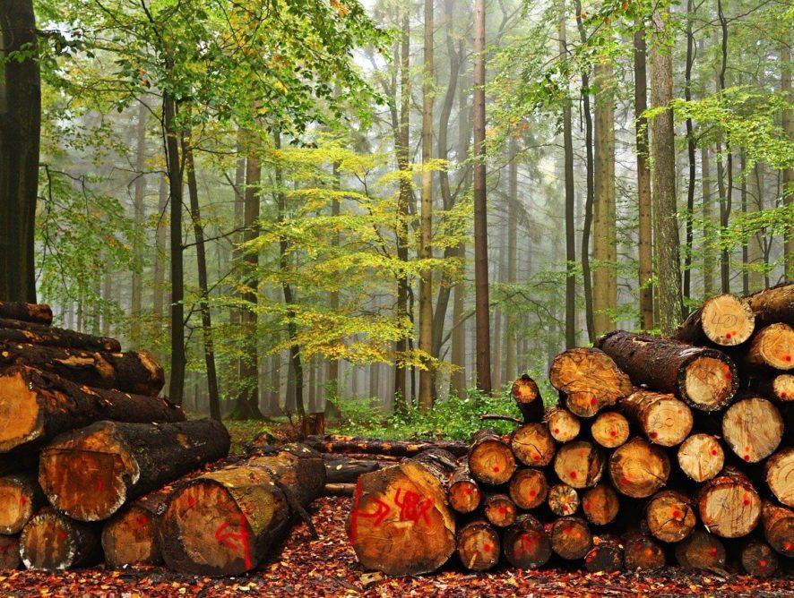 Вырубка деревьев в Московской области