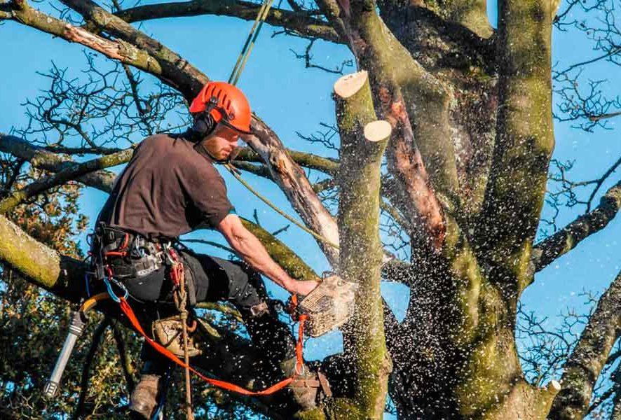 Омолаживающая, формовочная, cанитарная обрезка деревьев