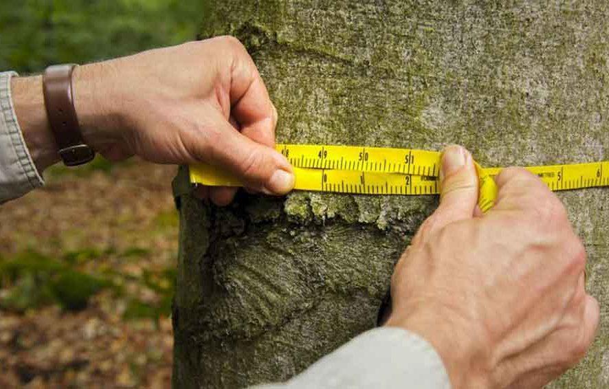 Инвентаризация зеленых насаждений
