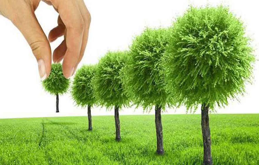 Пересадка зеленых насаждений