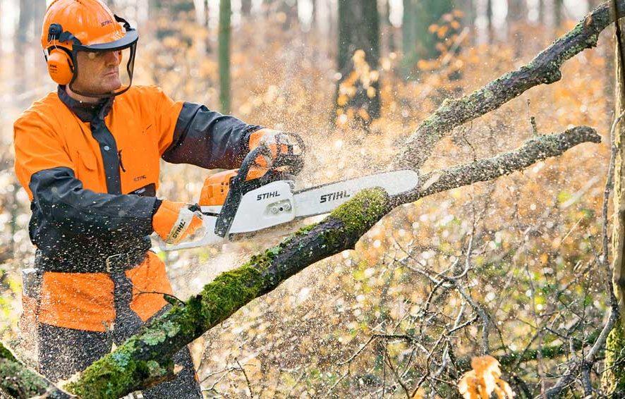 Вырубка сухостойных деревьев