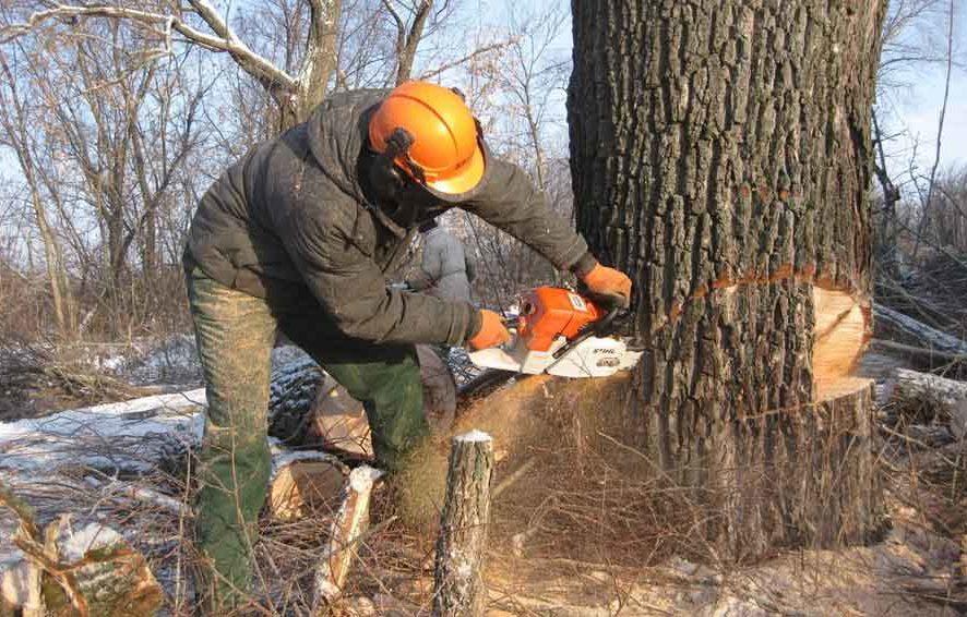 Вырубка, удаление зеленых насаждений, деревьев