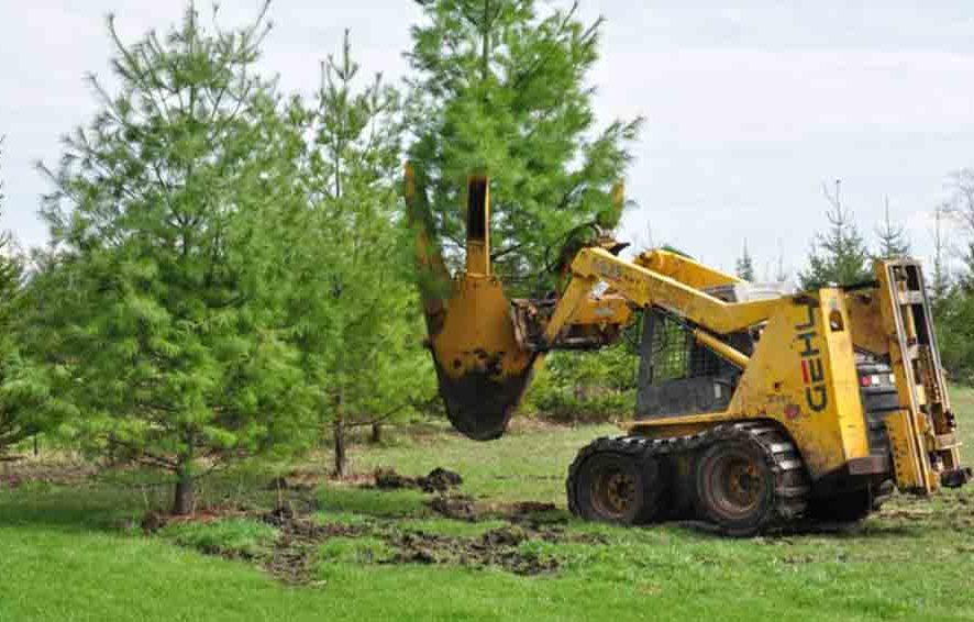 Как правильно пересадить дерево