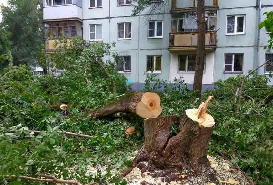 Срочная вырубка деревьев в Москве и МО