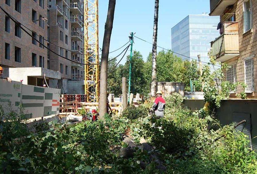 Спил деревьев при подготовке площадки строительства - правила