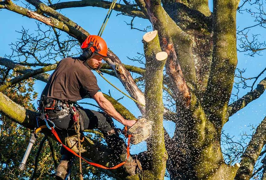 Кронирование деревьев в Москве – Выгодные цены!