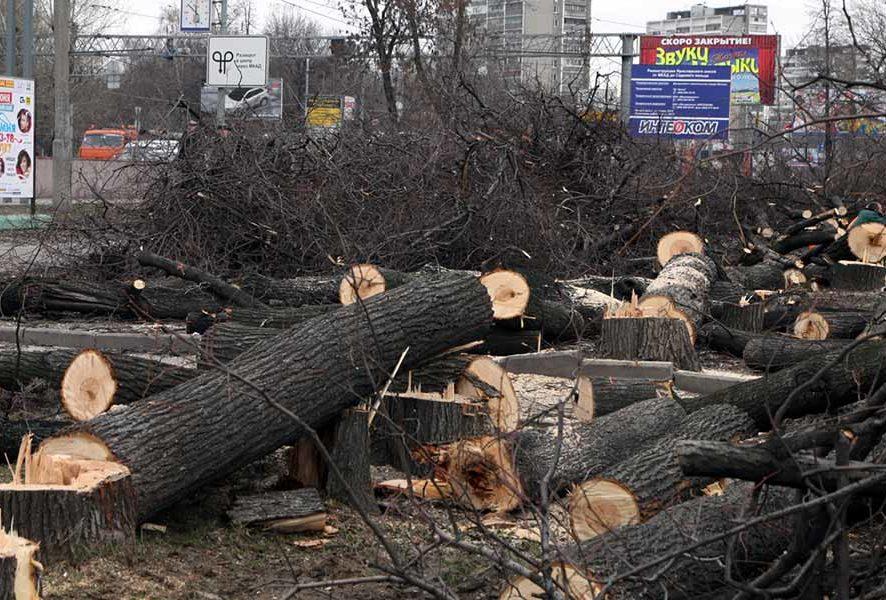 Вырубка деревьев в Москве с порубочным билетом