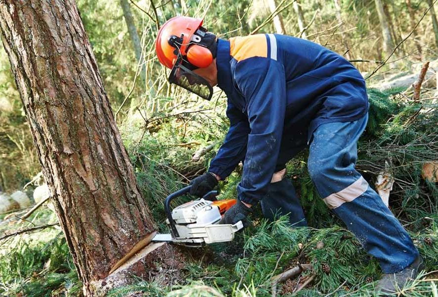 5 причин, почему вы должны срубить дерево