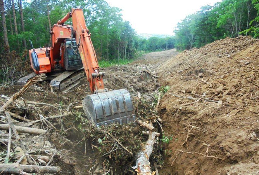 Разрешение на вырубку деревьев и кустарников