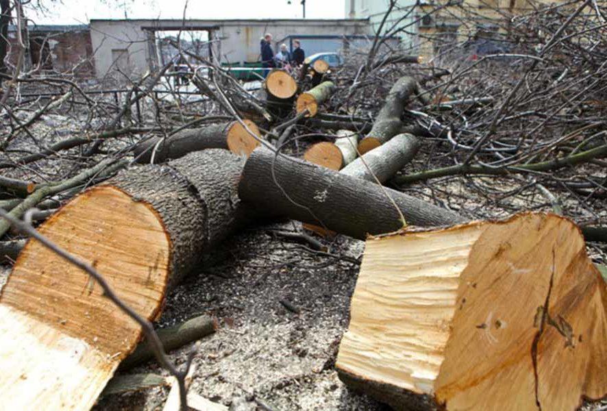 Вырубка деревьев от профессионалов