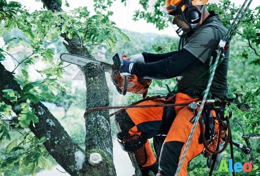 Разрешение на вырубку зеленых насаждений при строительстве