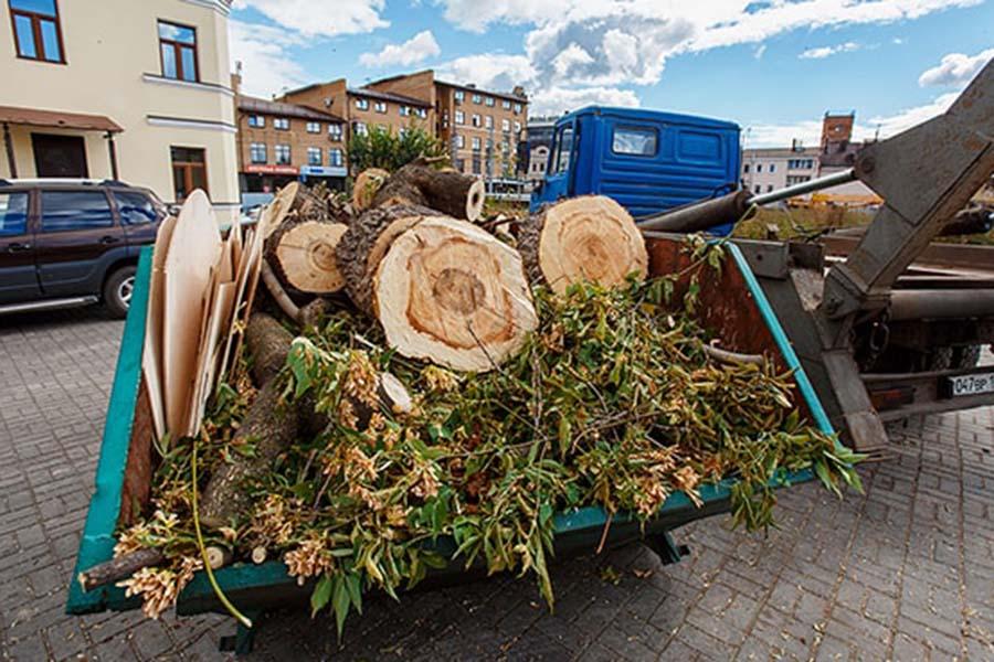 Спил деревьев и утилизация древесных отходов в Москве