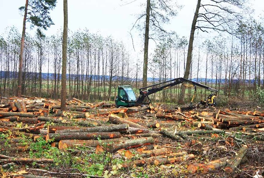 Вырубка деревьев под строительство в Москве