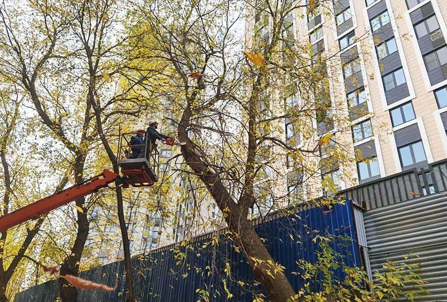 Обрезка высоких деревьев в Москве